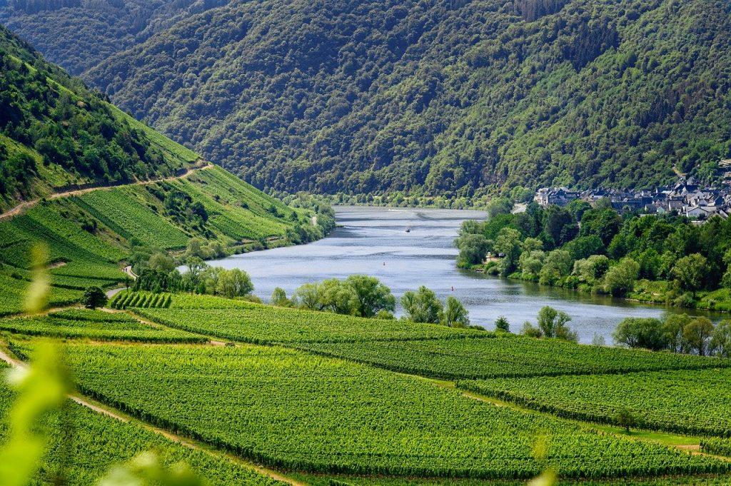 mosel, river, vineyards
