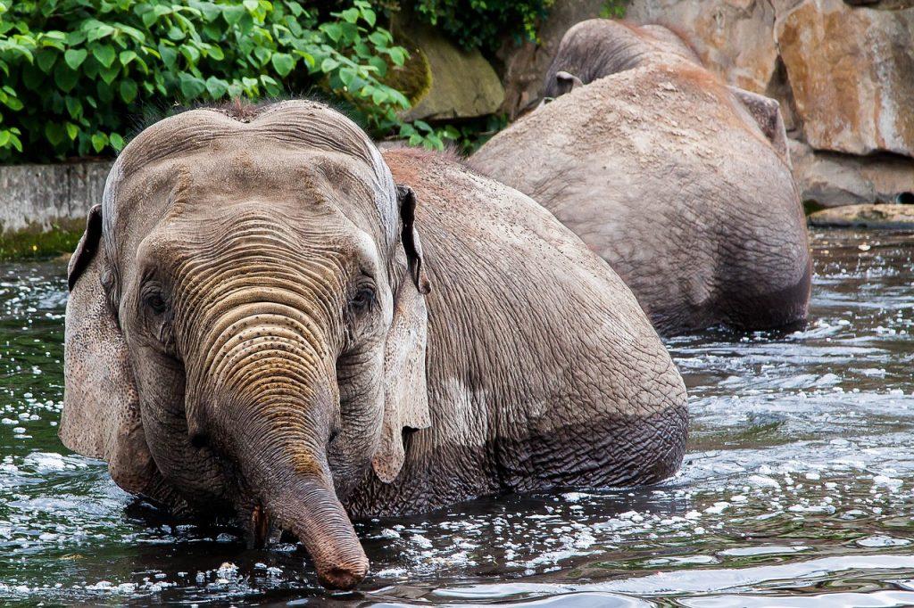 berlin, zoo, elephant
