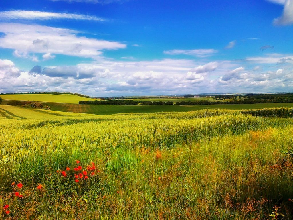 germany, landscape, wildflowers