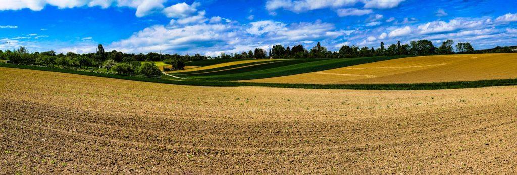 field, panorama, sheep
