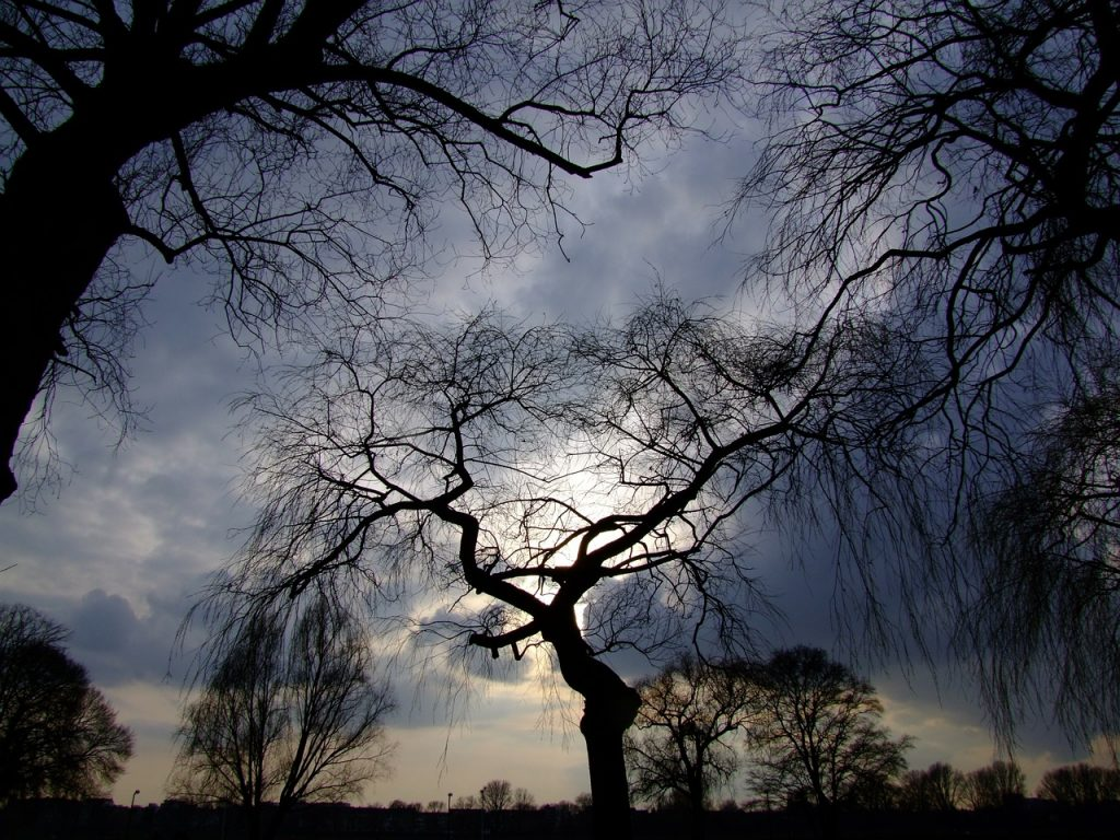 trees, dramatic sky, backlighting